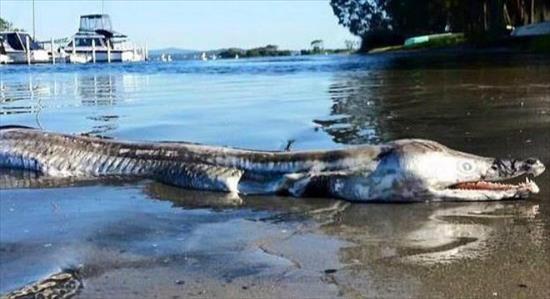 В Австралии на берегу озера нашли неизвестную рыбу-монстра